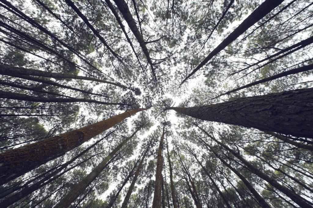 arbres-ciel_rond
