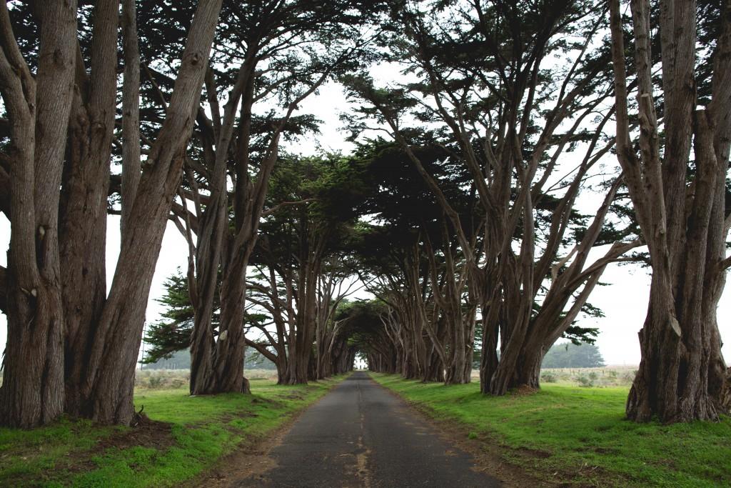 chemin_loin_arbres