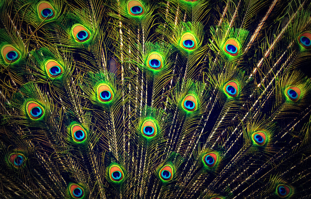 bird-feather-nature-pattern-peacock-Favim.com-287439