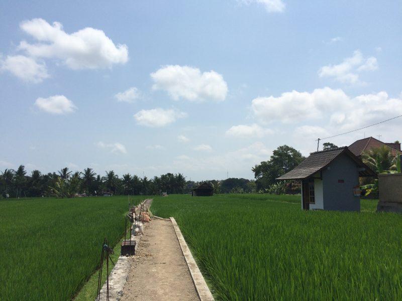 Champs de riz sur Bisma, Ubud, Bali