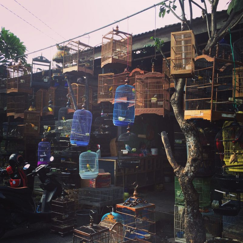 Caged Birds at the market in Denpasar