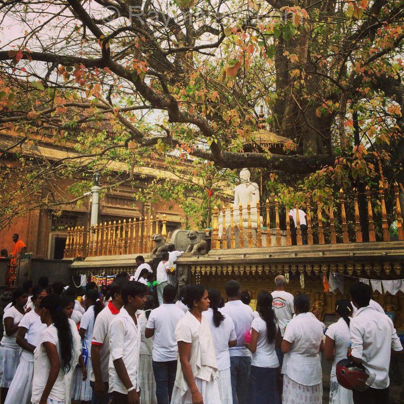 Un jour de pleine lune au Sri Lanka