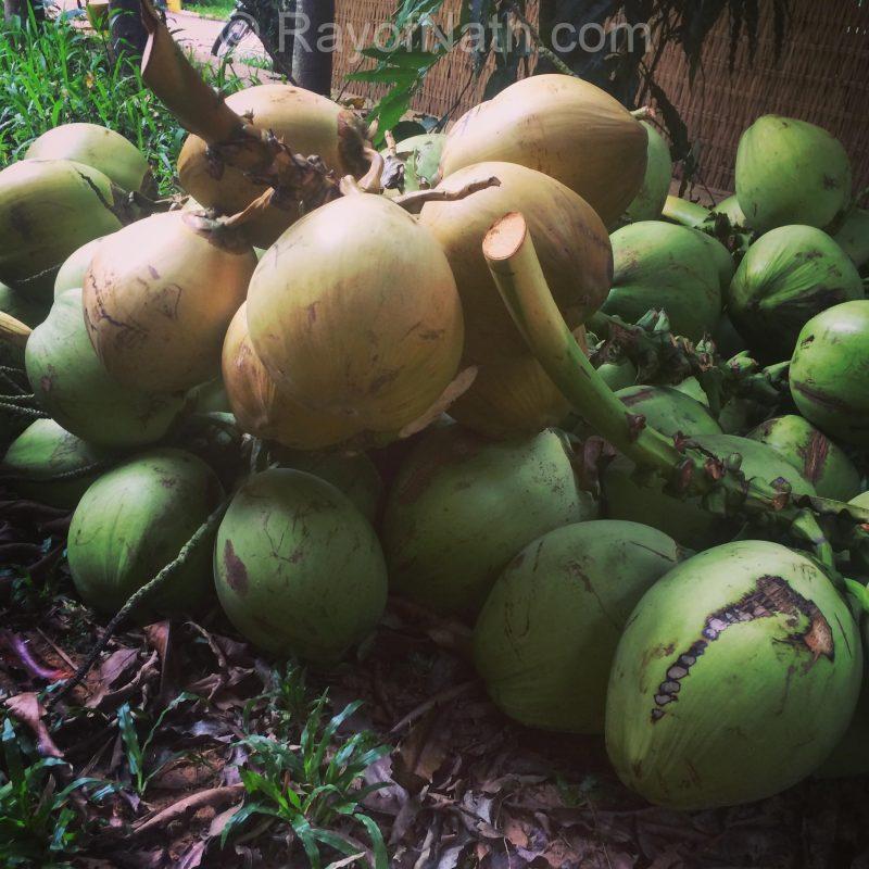 Jeune noix de coco, Vagabond Temple, Cambodge