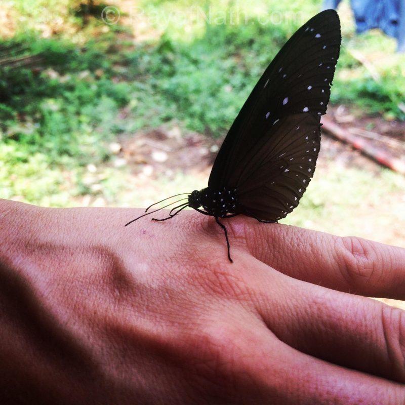Papillon porteur de message