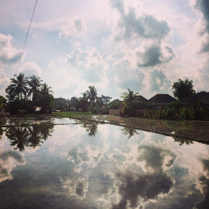 reflexion on the rice fields