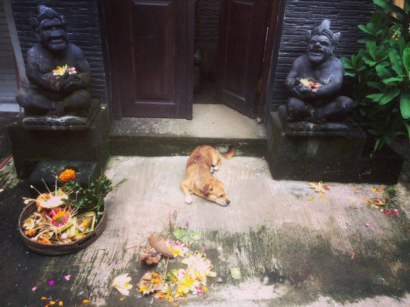 Balinese offerings on a Full Moon Day