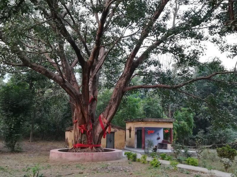 Holy Tree, Laxman Jhula, Rishikesh, Inde